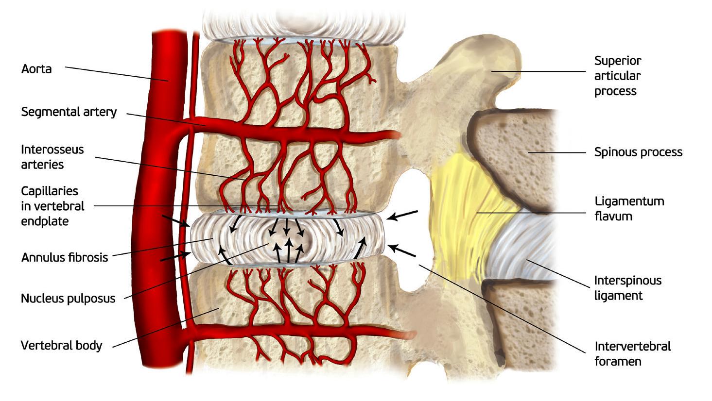 Tbls The Brain And Spine Lab Uniwersytetu Jagielloskiego